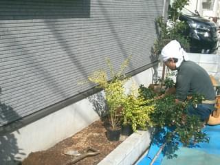 低木類の寄せ植え