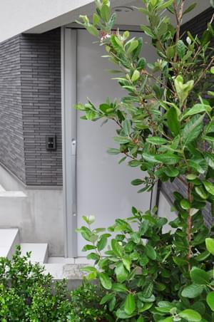 玄関に寄り添う植栽の緑