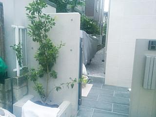 反対側花壇にもソヨゴを合わせます