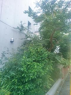 剪定前の花壇の植木の様子