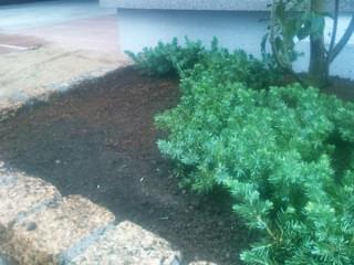 グランドカバーの植栽ライン