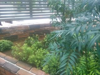 シモツケを植えて植栽が完成