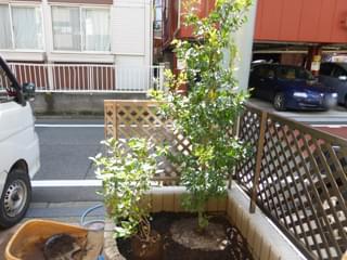 シンボルツリーと添え木の植栽