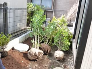 植木をお庭へ搬入します
