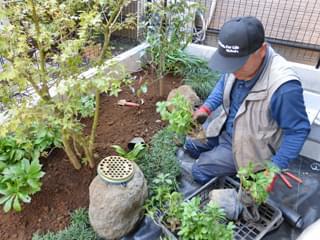 フッキソウや玉竜などの植栽