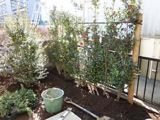 植栽の整った生垣