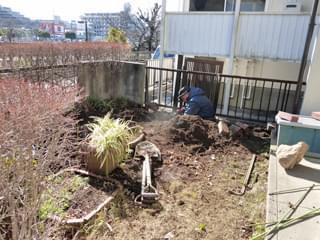 伐採によって広くなった庭