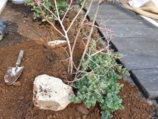 ブルーベリー周りに庭石とコニファー