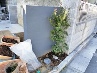 道路側へヒメシャリンバイを植栽