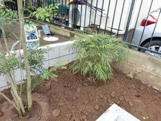 シンボルツリーの添える常緑低木