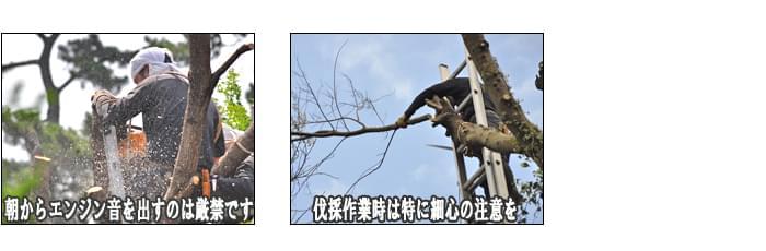 伐採作業は安全、周囲への配慮を