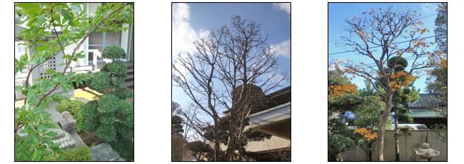 自然樹形を残す剪定技術