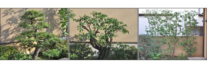 大切な盆栽仕立てや枝物の整枝剪定