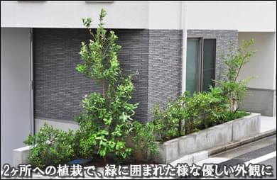 世田谷区F様邸 2ヶ所の花壇へ緑が溢れる様な植栽を
