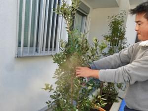 目隠しの植木を配置