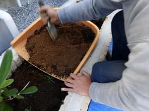 土壌改良を伴う植栽
