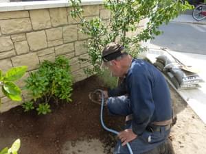 新規の土を入れながらの植栽作業
