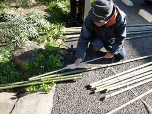 銅縁竹の切り出し