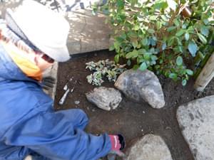 四つ目垣の前に添える植栽と庭石