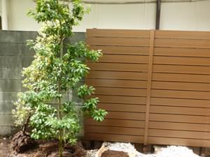 ソヨゴの植栽