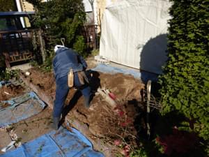 庭木の撤去を終えた庭