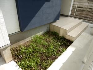 玄関横の植栽スペース