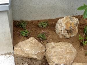 セダムの植栽