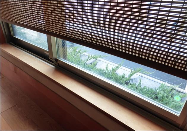 廊下から眺めるコニファー植栽の緑