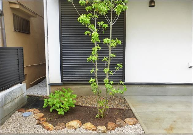 花壇の中に立つシンボルツリーのソヨゴ