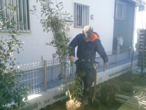 目隠し部分へ常緑樹の植栽