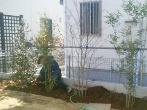 常緑樹と落葉樹の組み合わせ