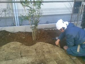 植栽に合わせた芝生エッジ