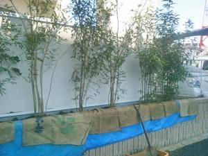 レイアウトを終えた植栽