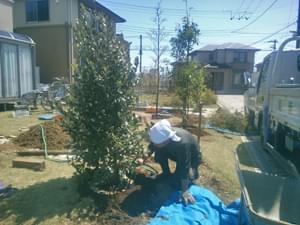 フェイジョアの植栽