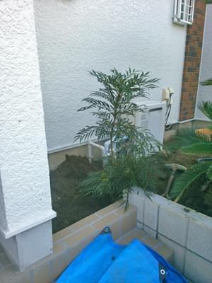 給湯器隠しの植栽