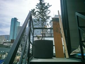 階段脇のプランター植栽