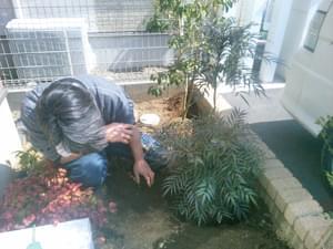 コンフューサの位置決め植栽