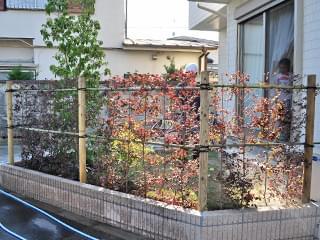 完成した生垣とシンボルツリー