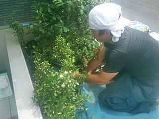 適度な間隔で寄せ植えを