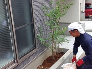 ブルーベリーを植栽
