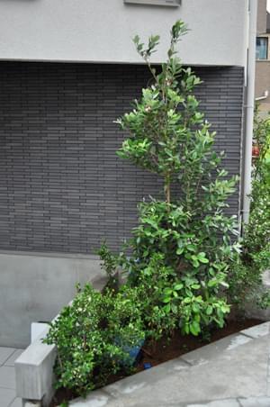 玄関周りの植栽風景