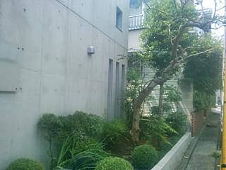 剪定を終えた花壇の植木