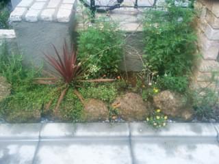 玄関前の既存植栽