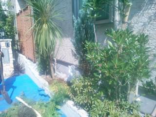 隣家側の植栽を撤去