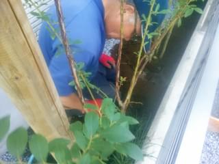 玄関から見える部分には下草類を植栽