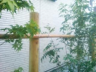 竹の打ち込み