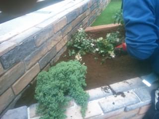 グランドカバーを植栽
