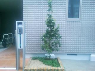 完成した花壇の植栽