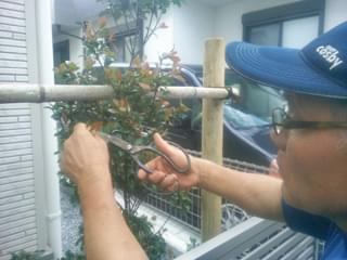 植栽の剪定調整