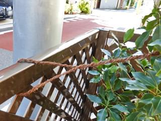 強風対策の縄